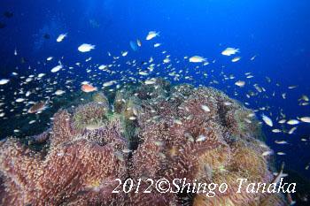 青いタオ島