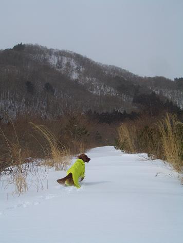 2月16日 森の散歩 016