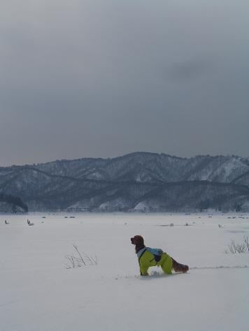 アーリーと桧原湖 029