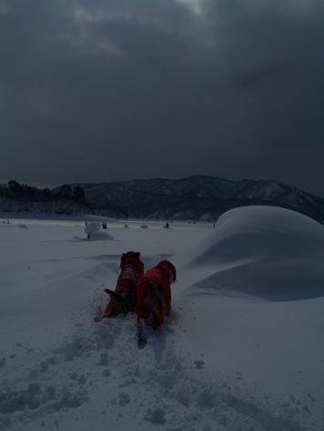 アーリーと桧原湖 038