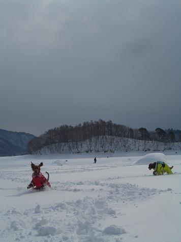 アーリーと桧原湖 054