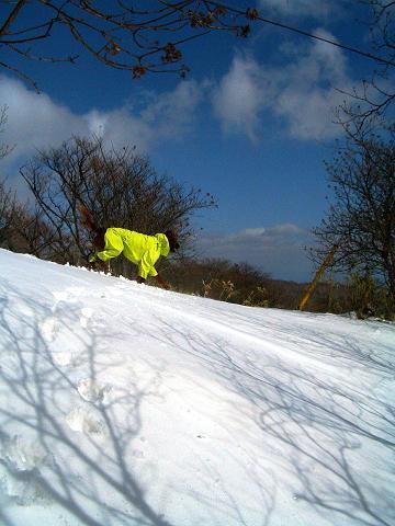 コークがスキー2