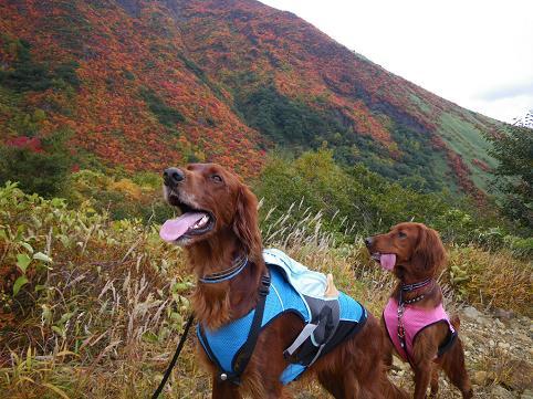 アーリー那須岳初登山(紅葉10.7) 002