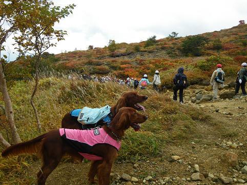 アーリー那須岳初登山(紅葉10.7) 007
