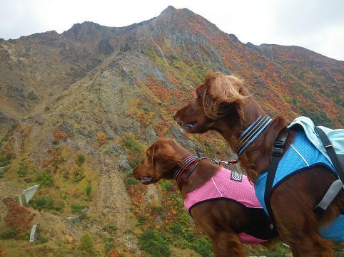 アーリー那須岳初登山(紅葉10.7) 022