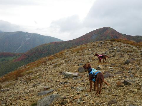 アーリー那須岳初登山(紅葉10.7) 038