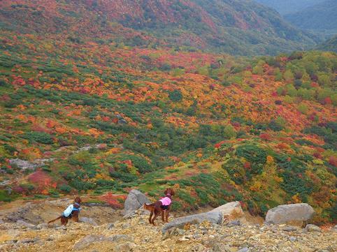 アーリー那須岳初登山(紅葉10.7) 066