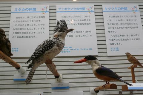 鳥の博物館