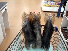 買い物3人娘
