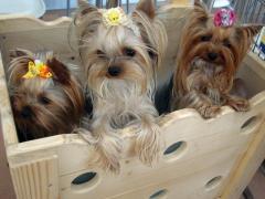 木箱で3人娘