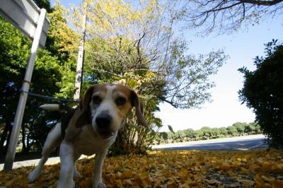 愛犬ベリー