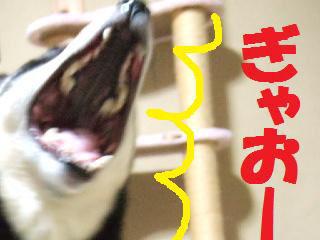 nana☆
