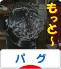 にほんブログ村 犬ブログ パグへ