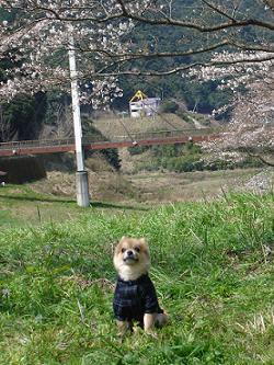 HANAMIRU2.jpg