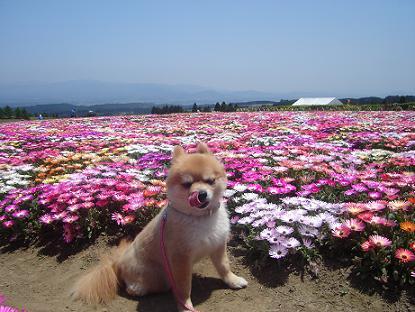 tiyokoro_20090606122520.jpg