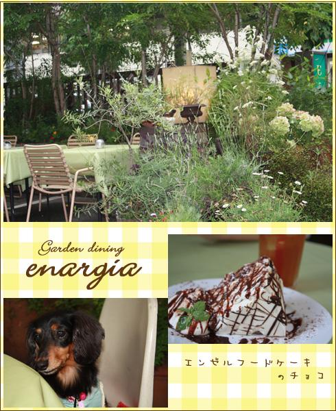 enargia1_edited-1.jpg