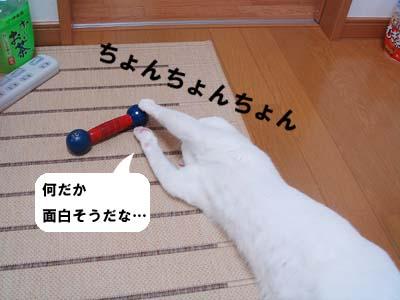 cat217