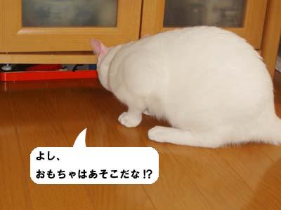 cat220