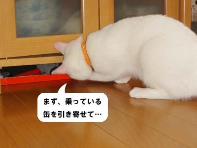 cat222