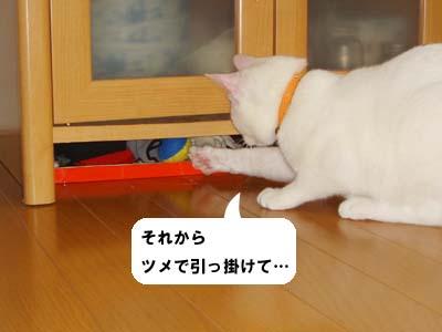 cat223