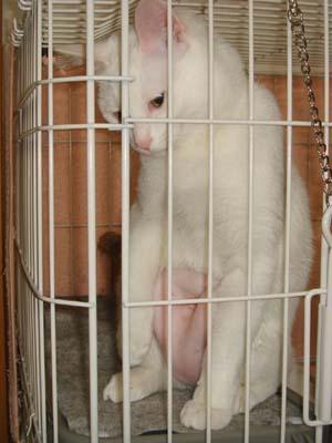 cat225