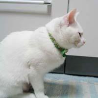 cat228