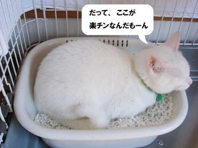 cat232