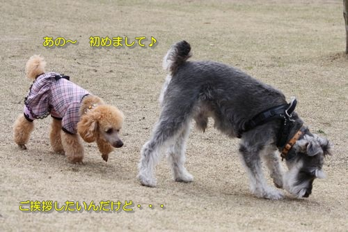 2009032804.jpg