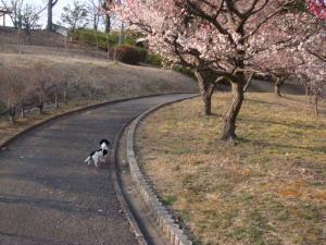 春ランラン♪