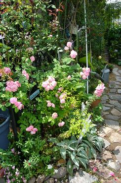 P1070026  garden