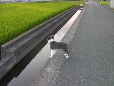 ディア散歩!