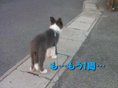 ディア散歩。