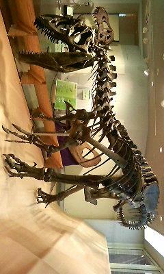 200809071534000化石.jpg