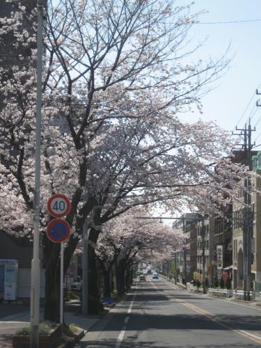 藤ヶ丘090407-1