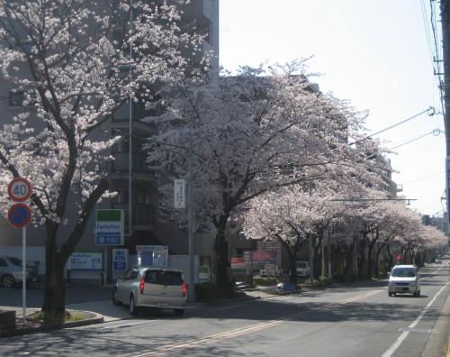 藤ヶ丘090407-2
