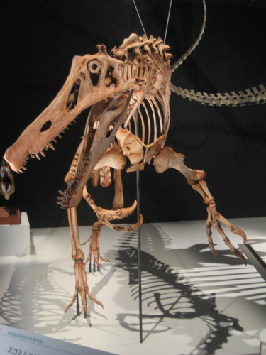 大恐竜展090428-2