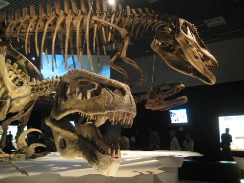 大恐竜展090428-3