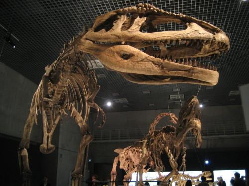 大恐竜展090428-4