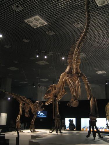 大恐竜展090428-6