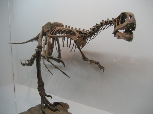 大恐竜展090428-7