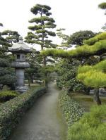 玉藻公園の松