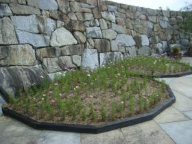 コスモス花壇