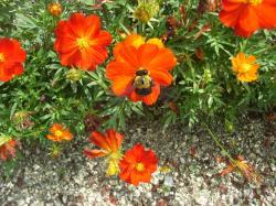 お食事中のハチ