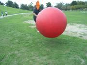 でっかいボールと戯れるハム太
