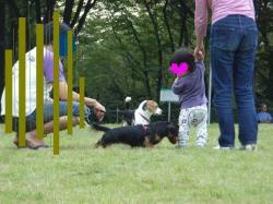 Sりん親子と犬