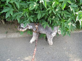 0604犬おしっこ