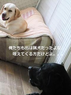 DSCF033011.jpg