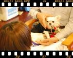 DSC_0065-20111107.jpg