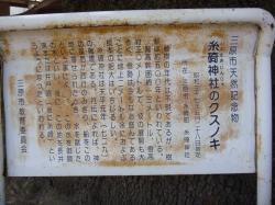 糸崎神社くすのき3