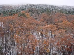 新入山紅葉&雪景色